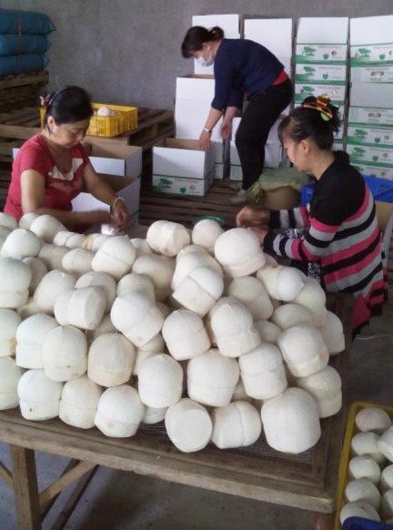 Dừa gọt vỏ xuất khẩu có đế