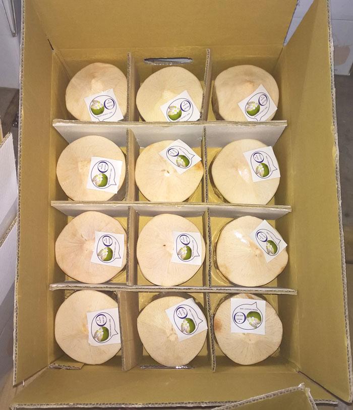 dừa-gọt-vỏ-xuất-khẩu-đóng-thùng-12-trái