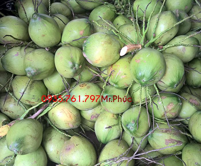 Dừa xiêm xanh nguyên trái trước khi gọt vỏ