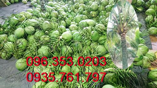 Vựa-dừa-xiêm-lớn-nhất--Bến-Tre-Miền-Tây-miền-nam