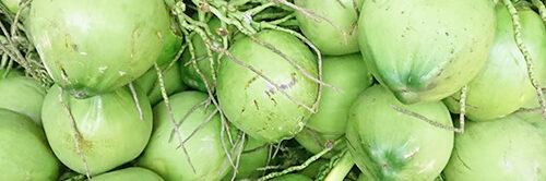 Vựa dừa tươi – Đại lý dừa xiêm xanh – Mua dừa xiêm số lượng lớn